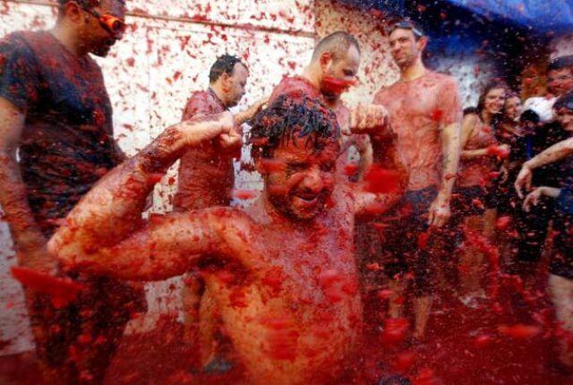 Tomato Fight (64 pics)