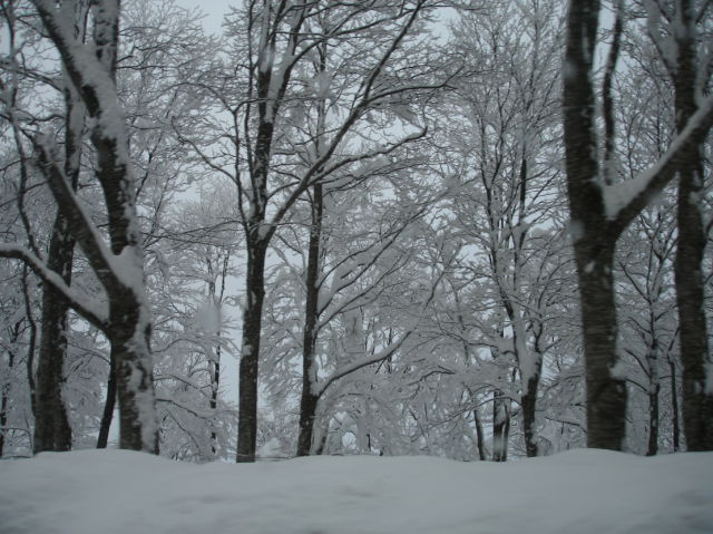 snow (1 pic)