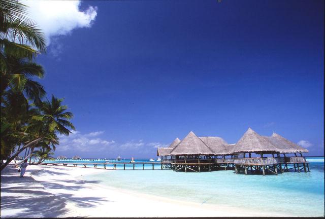 My Paradise